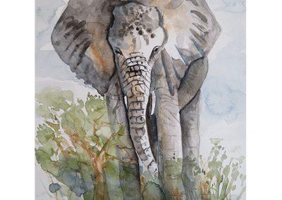 junger_elefant